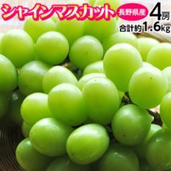 ブドウ ぶどう 送料無料 長野県産 「シャインマスカット」 4房 計約1.6キロ 常温