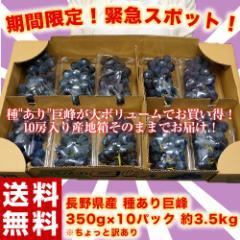 ブドウ ぶどう 送料無料 訳あり 長野県 種あり巨峰 約350g×10パック 約3.5キロ