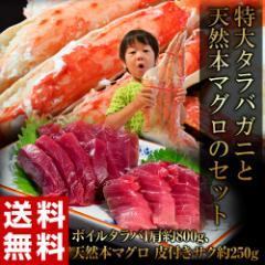 まぐろ マグロ カニ 蟹 送料無料 『特大タラバガニと天然本マグロのセット』 ボイル タラバ 1肩 約800g + 本マグロ サク 皮付き 約250g