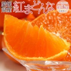 ギフト 柑橘 送料無料 愛媛県産 紅まどんな 化粧箱 L〜3L 約3キロ 10〜15玉 送料無料