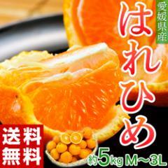 みかん ミカン オレンジ 送料無料 愛媛県産 はれひめ 約5キロ (M〜3Lサイズ)