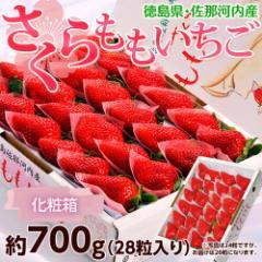 いちご 送料無料 徳島県佐那河内産「さくらももいちご」化粧箱 28粒 約700g ※冷蔵
