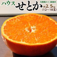 みかん 柑橘 送料無料 佐賀県産 からつ ハウス栽培 せとか 秀品 化粧箱 12〜18玉 約2.5キロ ※常温