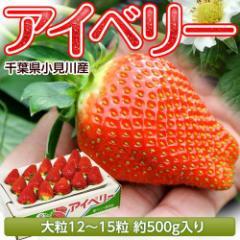 いちご 千葉県産 アイベリー 12〜15粒 約500g イチゴ 苺 果物 フルーツ 国産  お取り寄せ 冷蔵