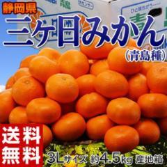 みかん 送料無料 静岡産 三ヶ日みかん(青島種) 3Lサイズ 約4.5kg
