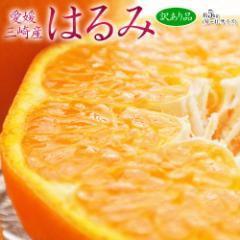 柑橘 送料無料 みかん 愛媛県 三崎産 訳あり はるみ M〜4Lサイズ 約5キロ