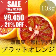 無農薬・無化学肥料 樹上完熟 ブラッドオレンジ 10kg 愛媛県産