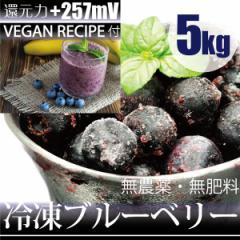 冷凍ブルーベリー 5kg −60℃で冷凍!ヴィーガンレシピDVD付き 千葉県産 自然栽培(無農薬・無肥料)