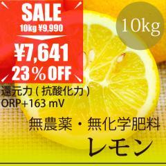 希少! 無農薬レモン 10kg 熊本県産 無農薬・無化学肥料・放射性物質検査済・糖度9.6%・還元力(抗酸化力)+163mV