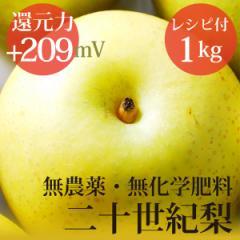 二十世紀梨 1kg  ヴィーガンレシピ付き 無農薬・無化学肥料 還元力(抗酸化力)ORP+209mV