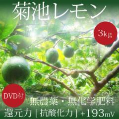 小笠原の菊池レモン3kg 無農薬・無化学肥料 ヴィーガンレシピDVD付き 還元力(抗酸化力)ORP+193mV