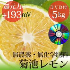 小笠原の菊池レモン5kg 無農薬・無化学肥料 ヴィーガンレシピDVD付き 還元力(抗酸化力)ORP+193mV