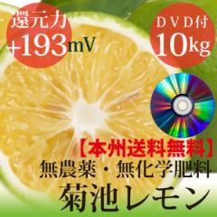 【送料無料】小笠原の菊池レモン10kg 無農薬・無化学肥料 ヴィーガンレシピDVD付き 還元力(抗酸化力)ORP+193mV