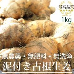 高知県産 泥付古根生姜1kg (無農薬・無肥料・無洗浄)放射性物質検査済