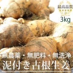 高知県産 泥付古根生姜3kg (無農薬・無肥料・無洗浄)放射性物質検査済