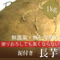 """擦りおろしても黒くならない""""長芋""""1本・無農薬・無化学肥料・無洗浄・放射性物質検査済・糖度9%・ORP+97mV"""