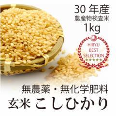 【30年産 新米】飛竜コシヒカリ玄米 1kg 酵素玄米に最適】無農薬・無化学肥料栽培  自家採種・固定種・放射性物質検査予定