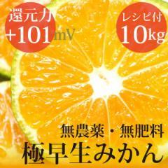 極早生みかん 10kg ヴィーガンレシピ付き 自然栽培(無農薬・無肥料)・熊本県産 還元力(抗酸化力)ORP+101mV