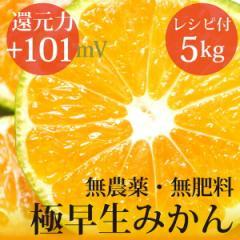極早生みかん 5kg ヴィーガンレシピ付き 自然栽培(無農薬・無肥料)・熊本県産 還元力(抗酸化力)ORP+101mV