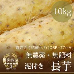 """""""長芋""""10kg 自然栽培(無農薬・無肥料)・放射性物質検査済・還元力(抗酸化力)+77mV"""