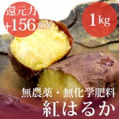 さつまいも 紅はるか 1kg 無農薬・無化学肥料・千葉県産 還元力(抗酸化力)ORP+156mV