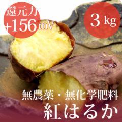 さつまいも 紅はるか 3kg 無農薬・無化学肥料・千葉県産 還元力(抗酸化力)ORP+156mV
