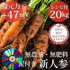自然栽培 泥付き人参 ニンジン20kg 特典レシピ+DVD付き  無農薬・無肥料・千葉県産・還元力(抗酸化力)+47mV