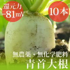 青首大根10本  無農薬・無化学肥料 千葉県産  還元力(抗酸化力)ORP−81mV