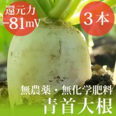 青首大根3本  無農薬・無化学肥料 千葉県産  還元力(抗酸化力)ORP−81mV