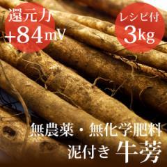 泥付き牛蒡 3kg ヴィーガンレシピ付き 無農薬・無化学肥料・千葉県産 還元力(抗酸化力)ORP+84mV
