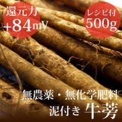 泥付き牛蒡 500g ヴィーガンレシピ付き 無農薬・無化学肥料・千葉県産 還元力(抗酸化力)ORP+84m