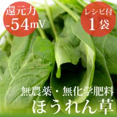 ほうれん草 200g×1袋 ヴィーガンレシピ付 無農薬・無化学肥料・千葉県産・還元力(抗酸化力)−54mV