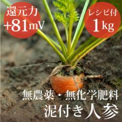 泥付き人参1kg ヴィーガンレシピ付き 無農薬・無化学肥料 還元力(抗酸化力)ORP+81mV