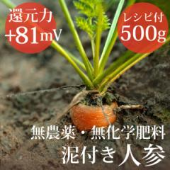 泥付き人参 500g ヴィーガンレシピ付き 無農薬・無化学肥料 還元力(抗酸化力)ORP+81mV