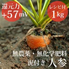 泥付き人参1kg ヴィーガンレシピ付き 無農薬・無化学肥料  還元力(抗酸化力)ORP+57mV