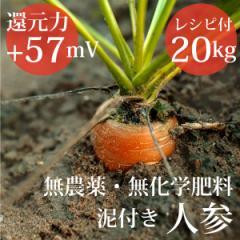 泥付き人参20kg ヴィーガンレシピ付き 無農薬・無化学肥料  還元力(抗酸化力)ORP+57mV