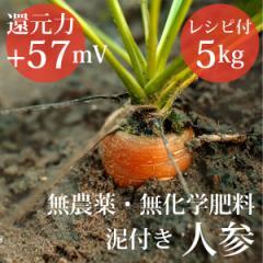 泥付き人参5kg ヴィーガンレシピ付き 無農薬・無化学肥料  還元力(抗酸化力)ORP+57mV