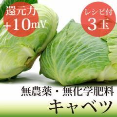 キャベツ3玉 無農薬・無化学肥料・ヴィーガンレシピ付き! 千葉県産・放射性物質検査済・還元力(抗酸化力)+10mV