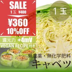 春キャベツ 1玉 無農薬・無化学肥料・千葉県産・酵素玄米御飯のキャベツ巻きヴィーガンレシピ付き