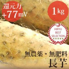 """""""長芋""""1kg 自然栽培(無農薬・無肥料)・放射性物質検査済・還元力(抗酸化力)+77mV"""