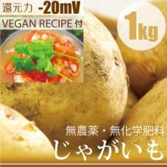 じゃがいも キタアカリ 1kg 無農薬・無化学肥料・冷製スープレシピ付き! 千葉県産・放射性物質検査済 還元力(抗酸化力)-20mV