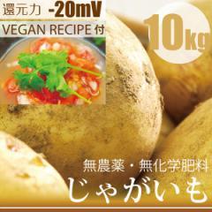 じゃがいも キタアカリ 10kg 無農薬・無化学肥料・冷製スープレシピ付き! 千葉県産・放射性物質検査済 還元力(抗酸化力)-20mV