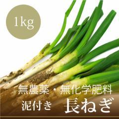 無農薬・無化学肥料 泥付き 長ねぎ 1kg 千葉県産