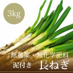 無農薬・無化学肥料 泥付き 長ねぎ 3kg 千葉県産