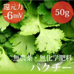 """""""パクチー""""50g 無農薬・無化学肥料・千葉県産・糖度7.2%・還元力(抗酸化力)−6mV"""