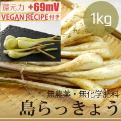 島らっきょう 1kg  無農薬・無化学肥料 塩らっきょうレシピ付き! 沖縄県産・還元力(抗酸化力)+69mV