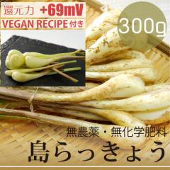 島らっきょう 300g  無農薬・無化学肥料 塩らっきょうレシピ付き! 沖縄県産・還元力(抗酸化力)+69mV