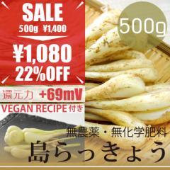 島らっきょう 500g  無農薬・無化学肥料 塩らっきょうレシピ付き! 沖縄県産・還元力(抗酸化力)+69mV