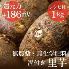 里芋 1kg ヴィーガンレシピ付き 無農薬・無化学肥料・千葉県産  還元力(抗酸化力)ORP+186mV