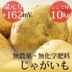 じゃがいも トヨシロ 10kg 無農薬・無化学肥料・ヴィーガンレシピ付き! 千葉県産・放射性物質検査済・還元力(抗酸化力)+162mV